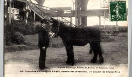 Animaux & Faune > Anes PARIS  / GALERIE DES MACHINES   BAUDET DE GRAND  PRIX     / A129 - Asino
