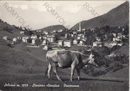 CARTOLINA  SELVINO M.1050,BERGAMO,LOMBARDIA,STAZIONE CLIMATICA-PANORAMA,CULTURA,BELLA ITALIA,MEMORIA,VIAGGIATA 1953 - Bergamo