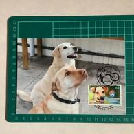 [Carte Maximum / Maximum Card /  Maximumkarte] Hong Kong 2021 | 100th Anniversary Of SPCA (Hong Kong) - Dog - Perros