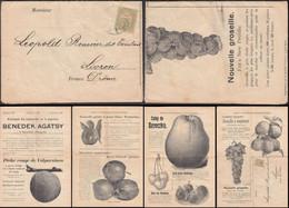 Hungary - Benedek Agátsy, Temesvár (Timisoara, Romania) Fruit Tree & Plants Advertising Catalogue 1903 - Livron, France. - Lettere