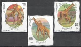 NW1452 2000 SOMALIA SOOMAALIYA GIRAFFES ANIMALS FAUNA #808-810 MICHEL 15 EURO MNH - Giraffes