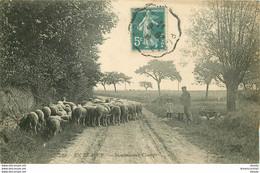 HR 28 EN BEAUCE. Pâtre Avec Chiens Et Moutons Aux Champs 1911 ND Phot. - Otros Municipios