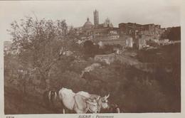 SIENA-PANORAMA-BUOI AL LAVORO -CARTOLINA VERA FOTOGRAFIA-NON VIAGGIATA-1920-1925 - Siena