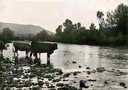43* RETOURNAC  Vaches - Loire  (CPSM 10x15cm)                 MA64-0459 - Retournac