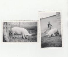 2 PHOTO (11x6.5 Cm) A SITUER FEMME BALAI COCHON,UN COCHON - Other