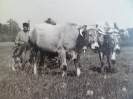 Formalt CPA - Photo Attelage Boeuf  Agriculture Moisson Attelage - Cultivation