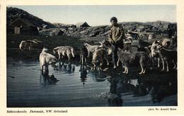 Grönland, Eskimohunde, Jkerasak, NW. Grönland, Photograph Dr. Arnold Heim - Groenlandia