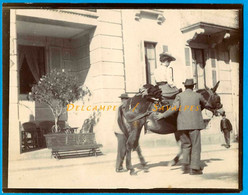 Chamonix 1901 * Femme En Amazone Sur Un Mulet En Mouvement Devant L'hôtel De Ville * Photo Originale - Places