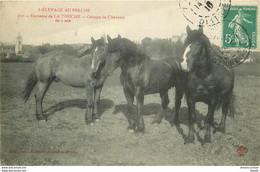 HR 28 Elevage Au Perche. Domaine De LA TOUCHE. Chevaux De 2 Ans 1910 - Altri Comuni