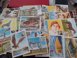 Monaco Lot De 52 Carte Maximum Dont Tableau 2 Chiens , La Sériés Chevaux - Maximum Cards