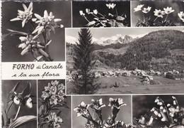 Belluno - Forno Di Canale E La Sua Flora - Fg Vg - Belluno