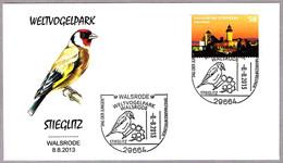 JILGUERO - GOLDFINCH - STIEGLITZ - Carduelis Carduelis - Ave - Bird. Walsrode 2013 - Sperlingsvögel & Singvögel