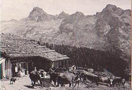 Le Grand Bornand  H1398         Vieux Chalet D'alpage Et La Pointe Percée ( Vache ) - Autres Communes