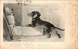 DOG Old POSTCARD ***Dachshund Dog**NICE - Dogs