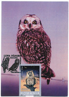MAX 14 - 89 OWL, Romania - Maximum Card - 2005 - Eulenvögel