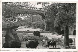ANVERS-ANTWERPEN - Jardin Zoologique - Vue Du Grand Parc Des Ruminants - N'a Pas Circulé - Antwerpen