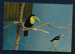 Carte Postale - Parc Ornithologique Départemental De La Dombes - Villars-les-Dombes (Ain) - Toucan à Bec Caréné - Vögel