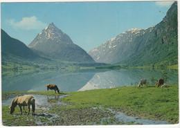 Norge: Parti Fra Byrkjelo, Nordfjord, Mot Eggenipa  - (Norge/Norway) - Horses -  (Normann) - Norvège