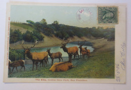 San Francisco Die Elche, Golden Gate Park 1906 ♥ (57899) - Sonstige