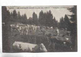 25 -  LES HOPITAUX-NEUFS ( Doubs ) - Alt. 1000 M - Troupeau Au Paturage - Otros Municipios