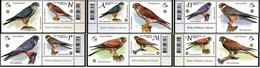 Belarus 2021 Set 6 V  With Label MNH Falcons Of The Series Birds Of Belarus Falcon Bird Oiseaux Oiseau - Eagles & Birds Of Prey