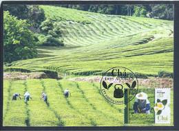 Maximum Postcard Of The Azores Tea. Teapot. Gorreana Tea Field. Maximale Postkarte Des Azoren-Tees. Teekanne. Gorreana-T - Other