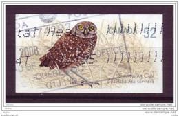 Canada, Hibou, Owl, Rapace, Oiseau, Bird - Swallows