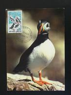 Carte Maximum Card Macareux Puffin Saint Pierre Et Miquelon 1973 - Cartoline Maximum