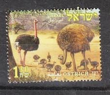 Israele   -   2005. Struzzo.Ostrich - Ostriches