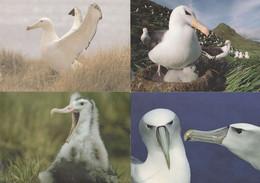 Stop Albatross Cruelty Bird Slaughter 4x RSPB Campaign Postcard S - Uccelli