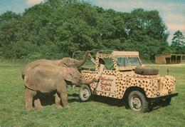 Windsor Safari Zoo 1970s Truck Feeding Baby Elephants Rare Postcard - Elefanti
