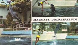 Margate Dolphinarium Sealife Centre Rare 1970s Postcard - Fish & Shellfish