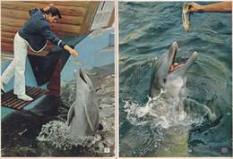 Bottle Nosed Dolphin Marineland 2x 1950s Postcard S - Fish & Shellfish