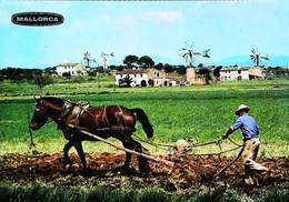 ►  CPSM  Mallorca Agricultor Agriculteur  Cheval Hourse - Mallorca