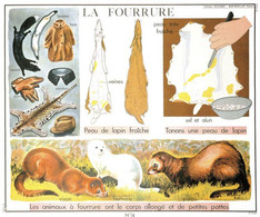 Animal Fur Mink Coat For Clothing Old French School Chart Postcard - Non Classificati