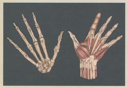 Human Hands Muscles Skeleton Fingers Morbid X-Ray Postcard - Non Classificati