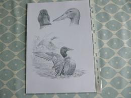 "BEAUTIFUL ""BUZIN"" DRAWING ON A4 FORMAT - 1985-.. Birds (Buzin)"