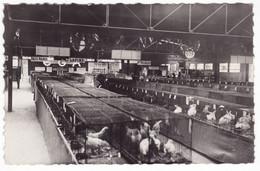 Exposition Internationale De Neuilly Sur Marne Juin 1946 ,  Aviculture & Apiculture - Neuilly Sur Marne