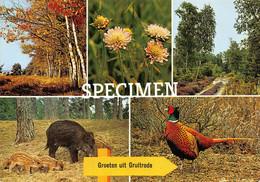 Groeten Uit Gruitrode  @ Gruitrode - Meeuwen-Gruitrode