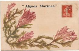 QUIBERON - Algues Marines - Quiberon