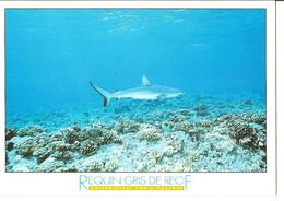 CPM - MUSEE OCEANOGRAPHIQUE DE MONACO - REQUIN GRIS DE RECIF - Poissons Et Crustacés