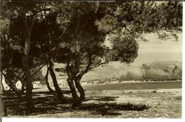 """CP De MALLORCA  """" Pollensa - Playa Y Pinar """" - Mallorca"""