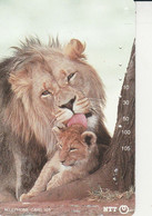 LIONS - Giungla
