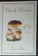 Petit Calendrier De Poche 1993 Champignon Bolet Cèpe De Bordeaux Pharmacie  Allonnes Sarthe - Illustration Rublon - Formato Piccolo : 1991-00