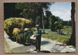 CPSM 48 - LOZERE - Une Rencontre Sur Une Route De Lozère - TB PLAN ATTELAGE BOEUF Agriculteur - Non Classés