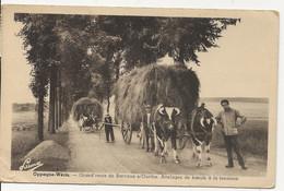 Oppagne -Wéris . Grand Route De Barvaux S/ Ourthe . Attelages De Boeufs  à La Fenaison - Durbuy