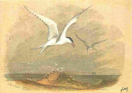 Animaux - Oiseaux - Sterne Pierregarin - Editeur Yvon - Collection Oiseaux De Mer - Dessin - CPM - Voir Scans Recto-Vers - Vogels