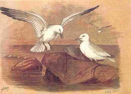 Animaux - Oiseaux - Goéland - Editeur Yvon - Collection Oiseaux De Mer - Dessin - Carte Neuve - CPM - Voir Scans Recto-V - Vogels
