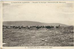 HAUTE-LOIRE : Chanaleilles, Domaine Du Sauvage, Troupeau De Vaches Allant A La Traite... - Altri Comuni
