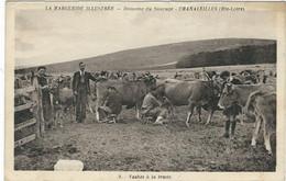 HAUTE-LOIRE : Chanaleilles, Domaine Du Sauvage, Vaches A La Traite... - Altri Comuni
